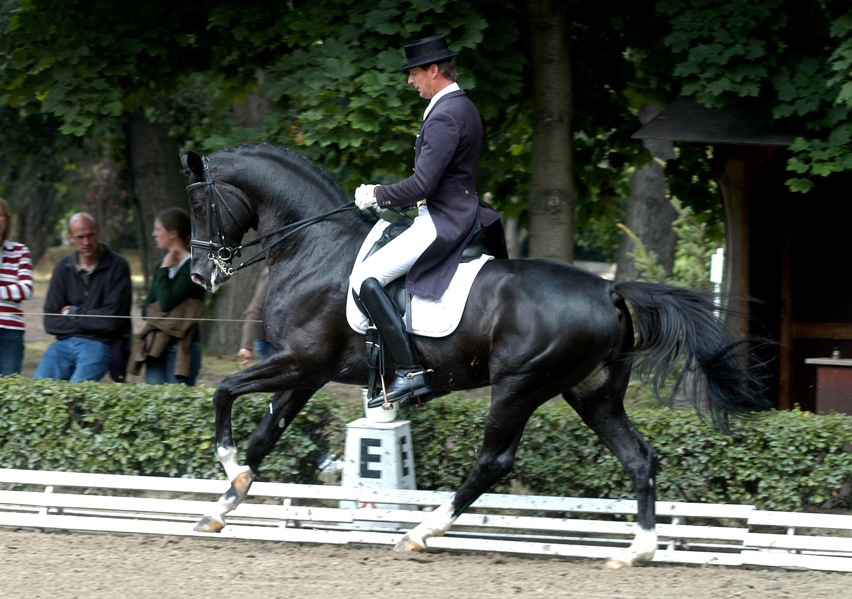 Pferdepraxis Boyenstein